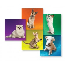 UAL Kids Stickers - Dogs and Cats - 2.5x2.5 - RL90